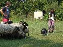 Přijely se na nás podívat ovečky :-)